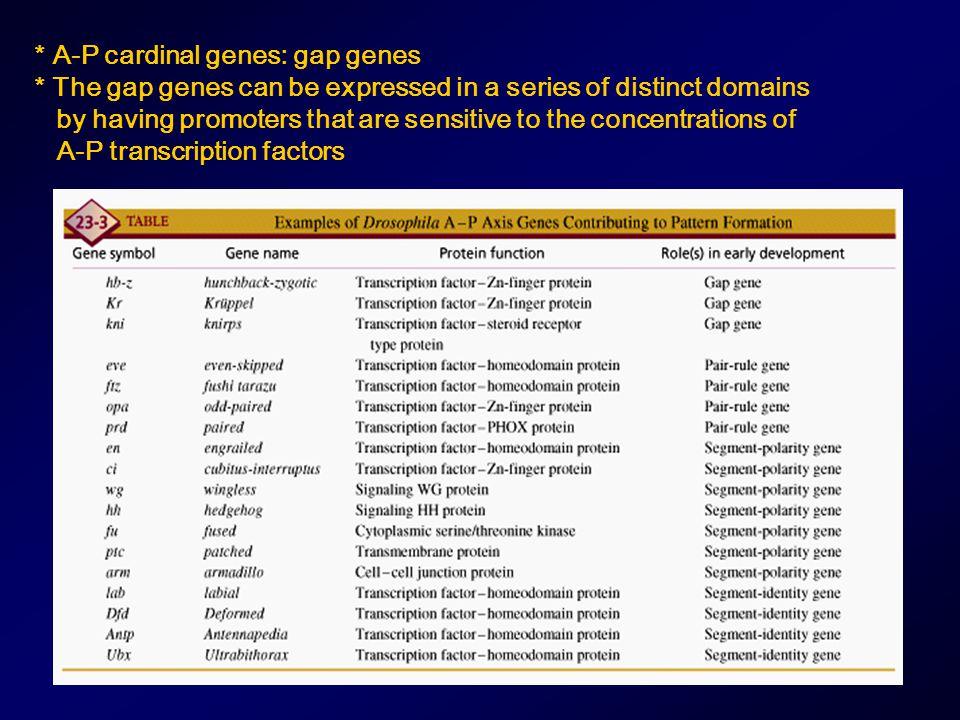 * A-P cardinal genes: gap genes