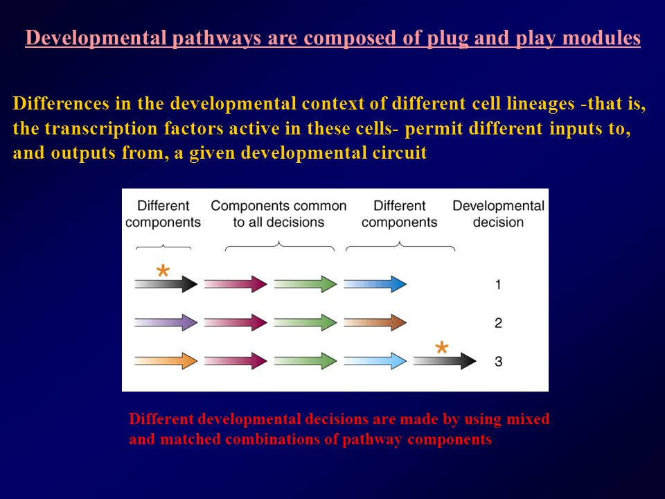 Developmental pathways are composed of plug and play modules