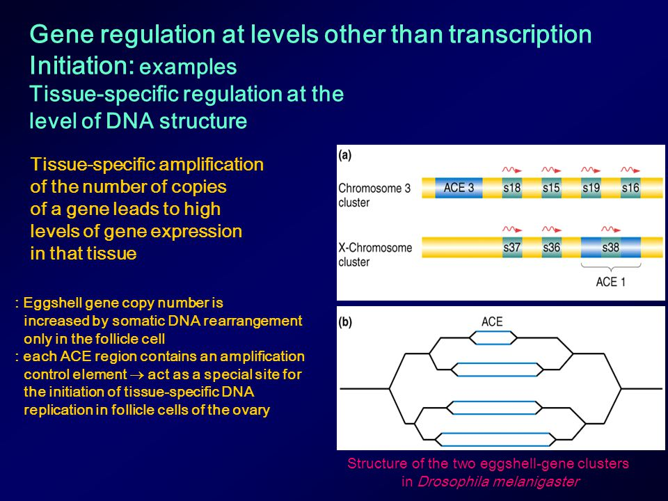 Gene regulation at levels other than transcription