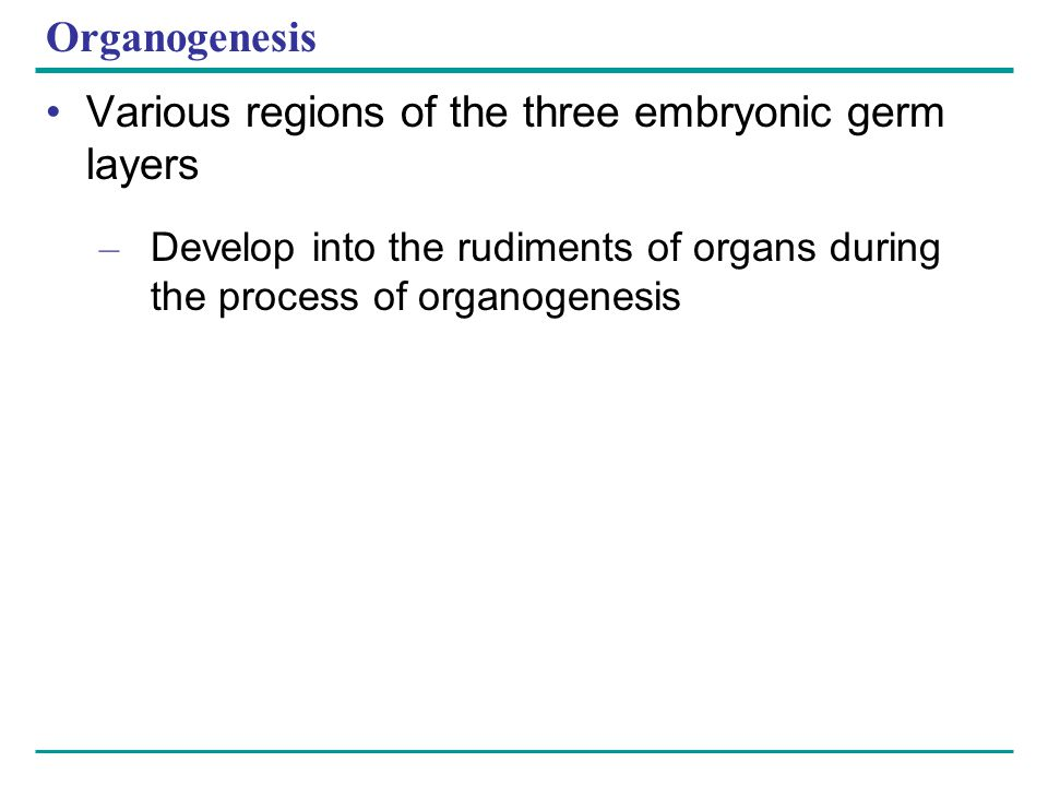 Various regions of the three embryonic germ layers