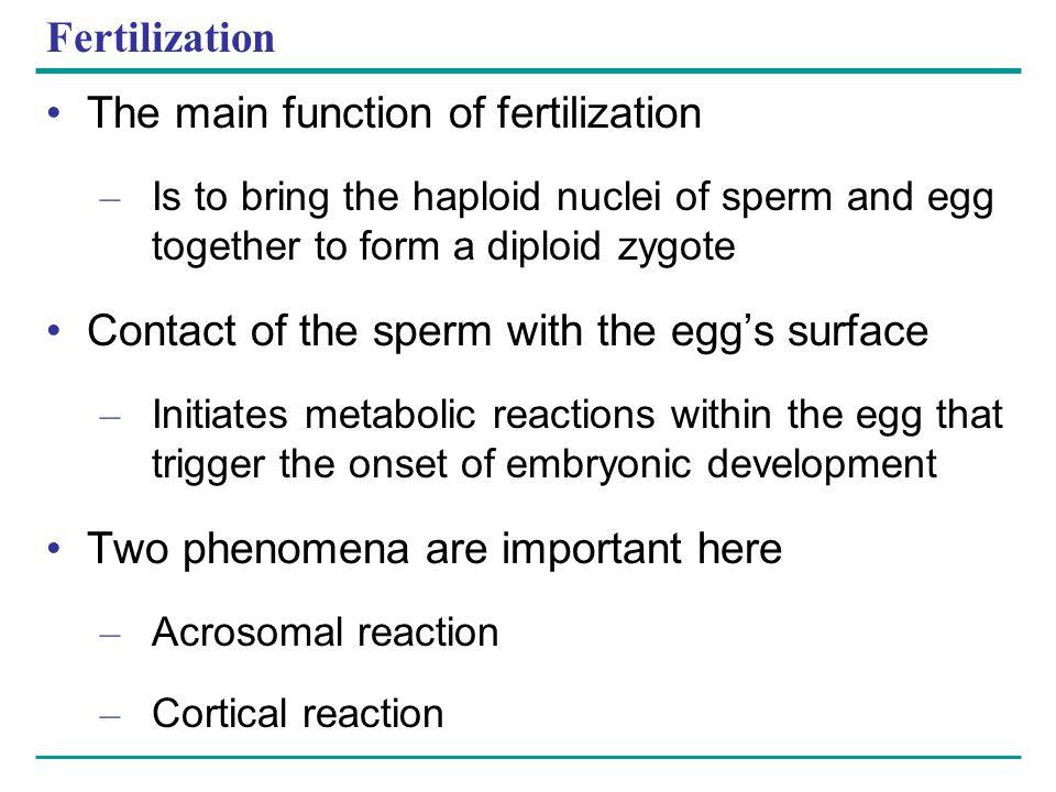 The main function of fertilization