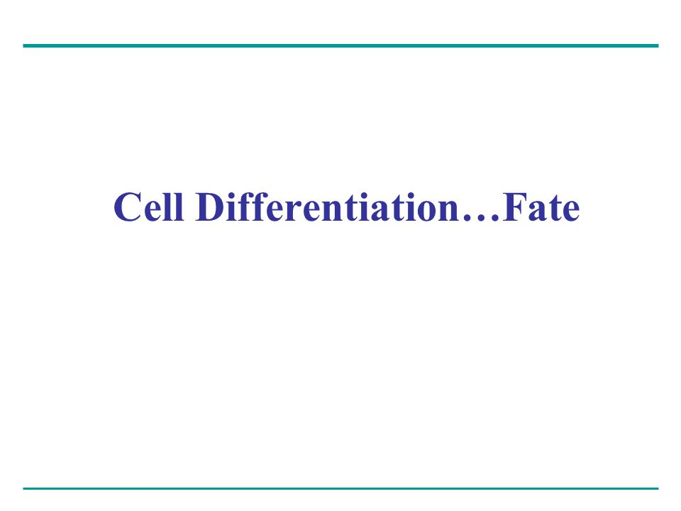 Cell Differentiation…Fate