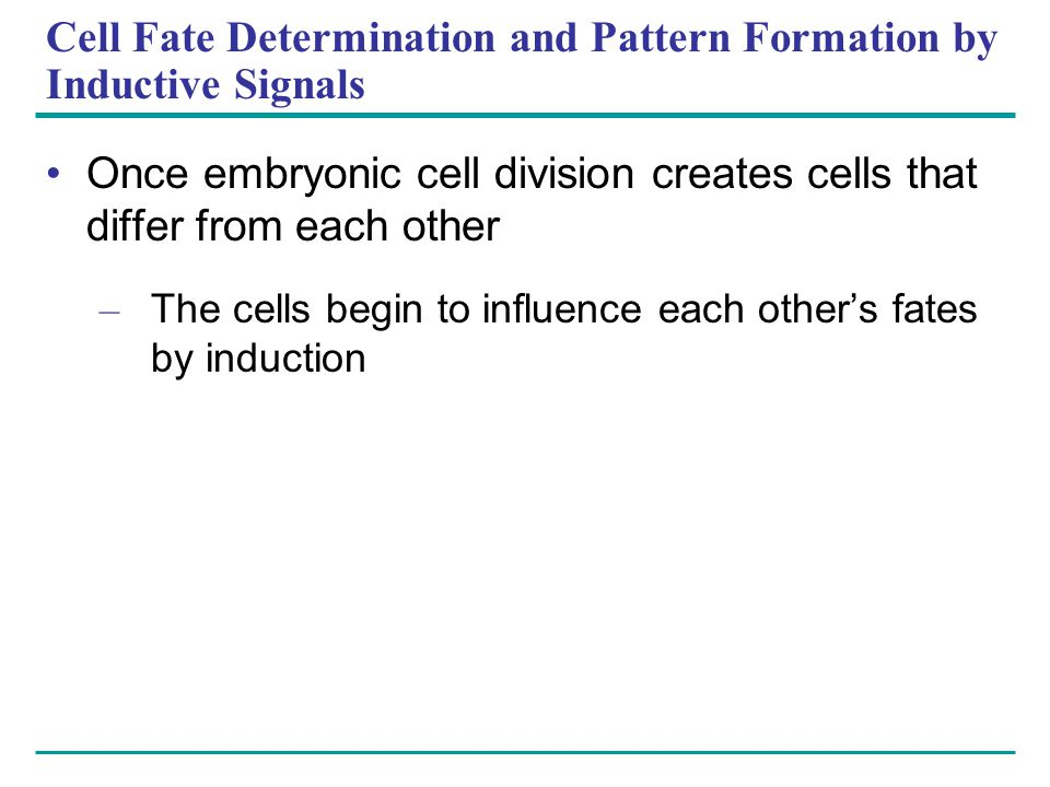 Cell Fate Determination and Pattern Formation by Inductive Signals