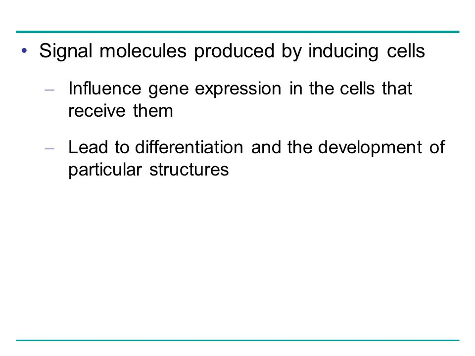 Signal molecules produced by inducing cells