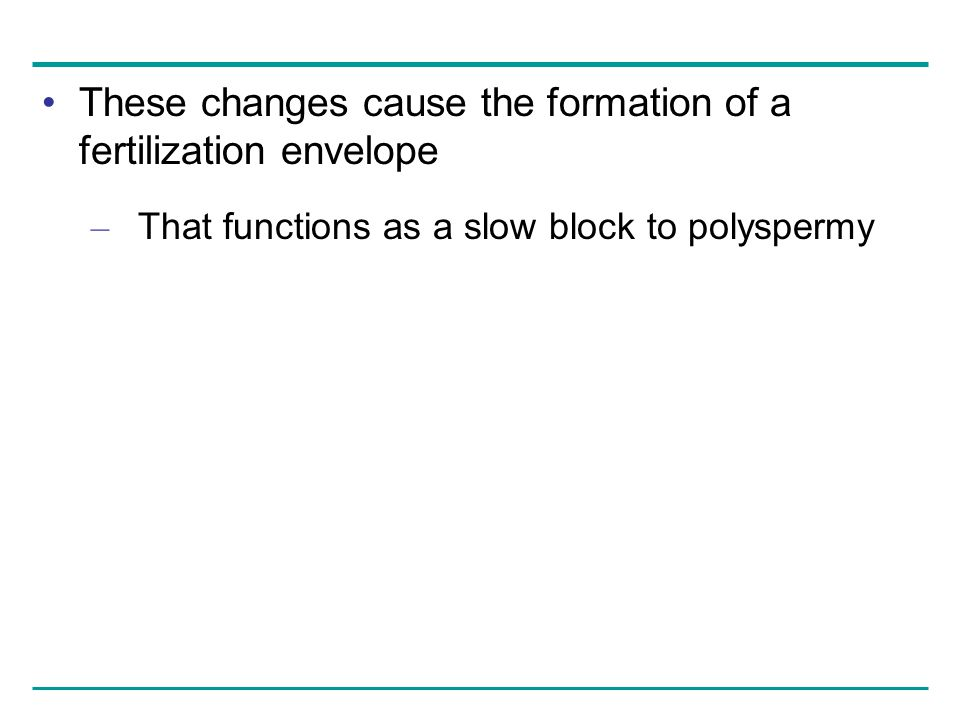 These changes cause the formation of a fertilization envelope