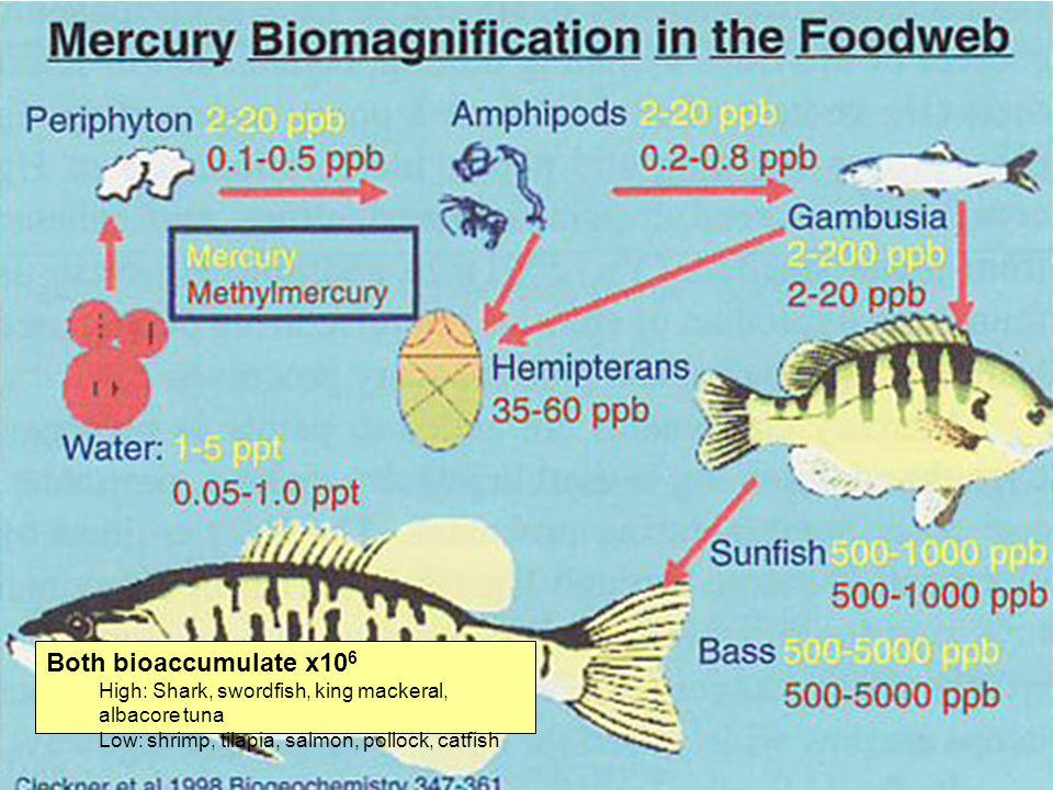 Fate Both bioaccumulate x106