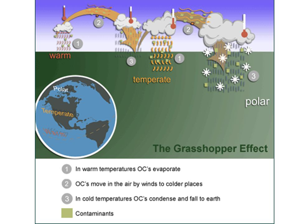 Grasshopper Effect http://www.itk.ca/environment/contaminants-sources-pathways.php