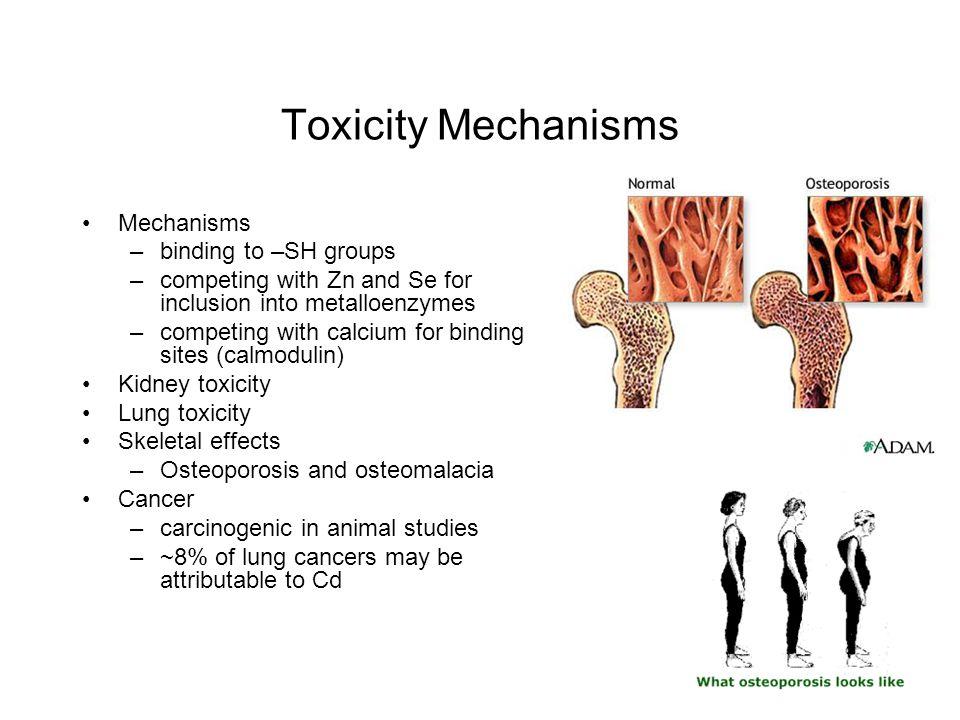 Toxicity Mechanisms Mechanisms binding to –SH groups