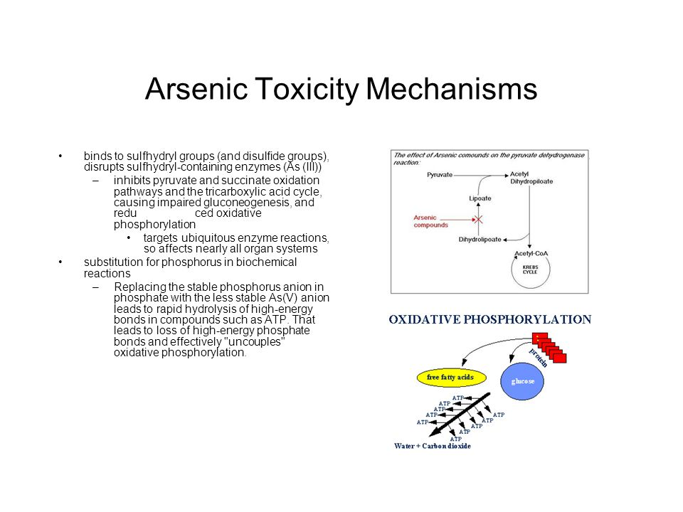 Arsenic Toxicity Mechanisms