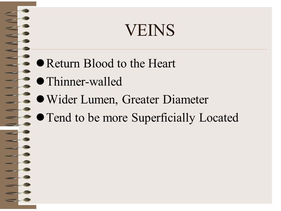 VEINS Return Blood to the Heart Thinner-walled