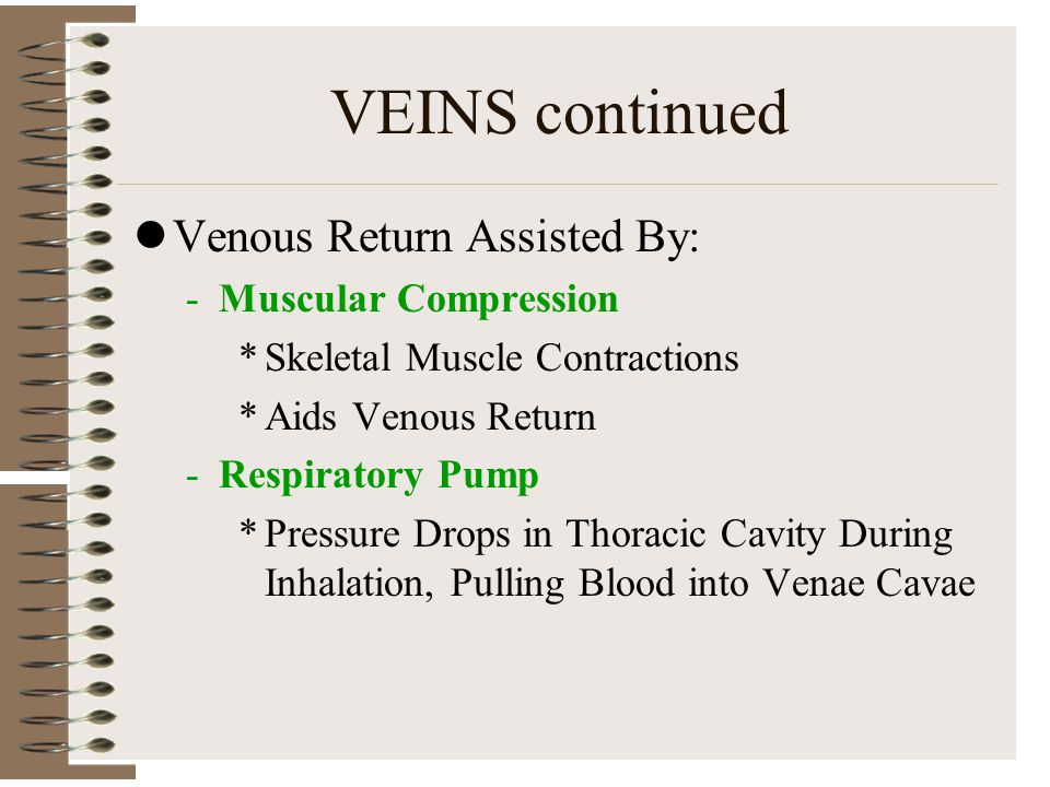 VEINS continued Venous Return Assisted By: Muscular Compression