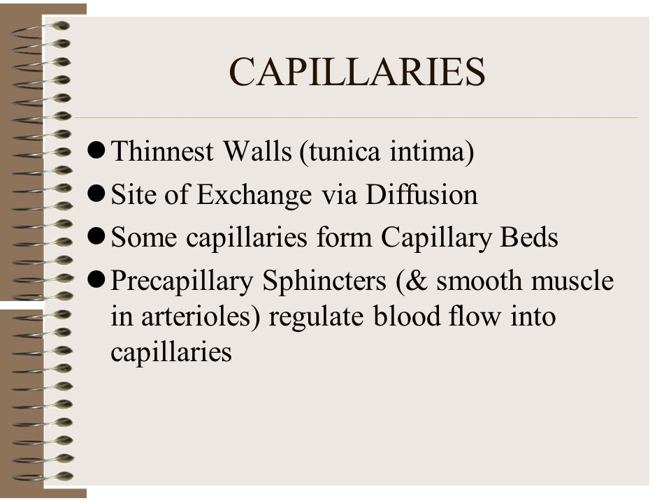 CAPILLARIES Thinnest Walls (tunica intima)