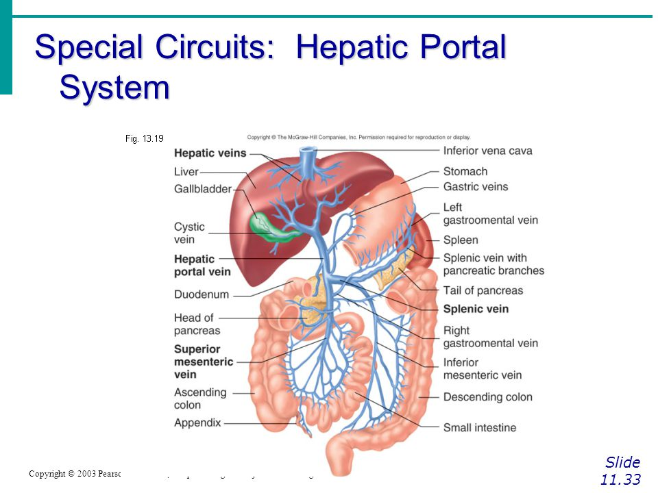 Special Circuits: Hepatic Portal System