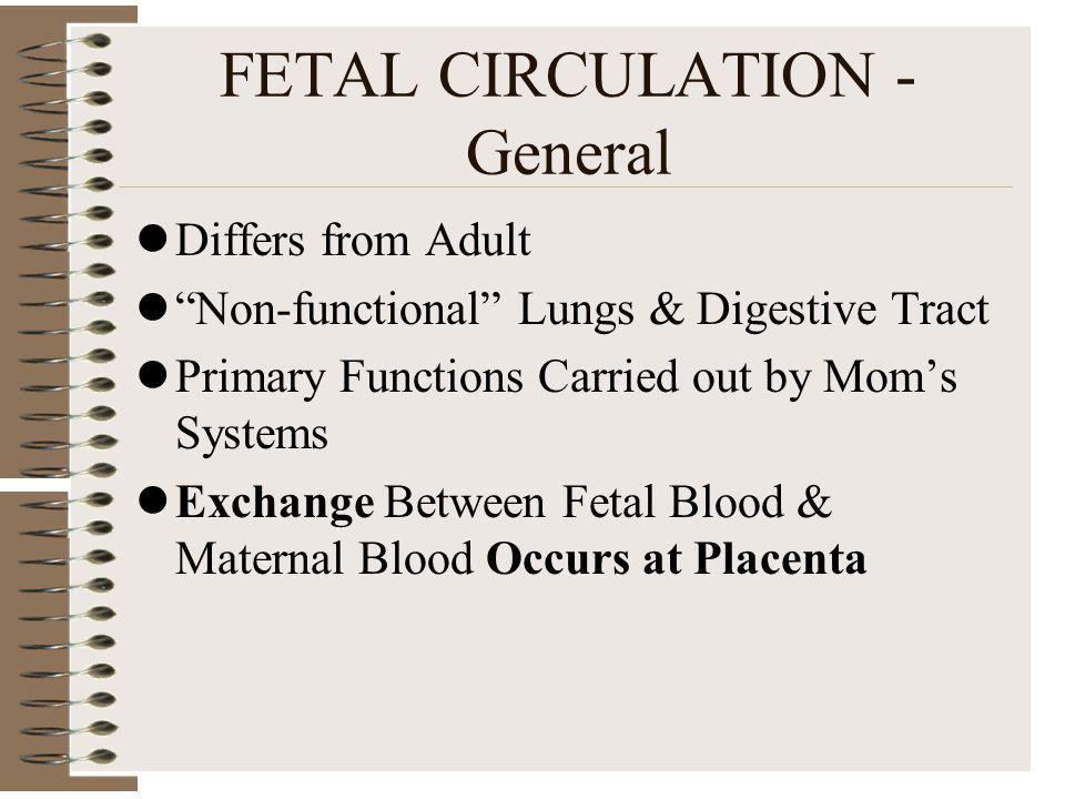 FETAL CIRCULATION - General