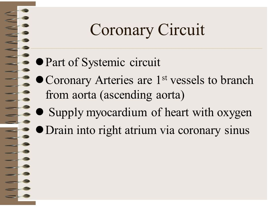 Coronary Circuit Part of Systemic circuit