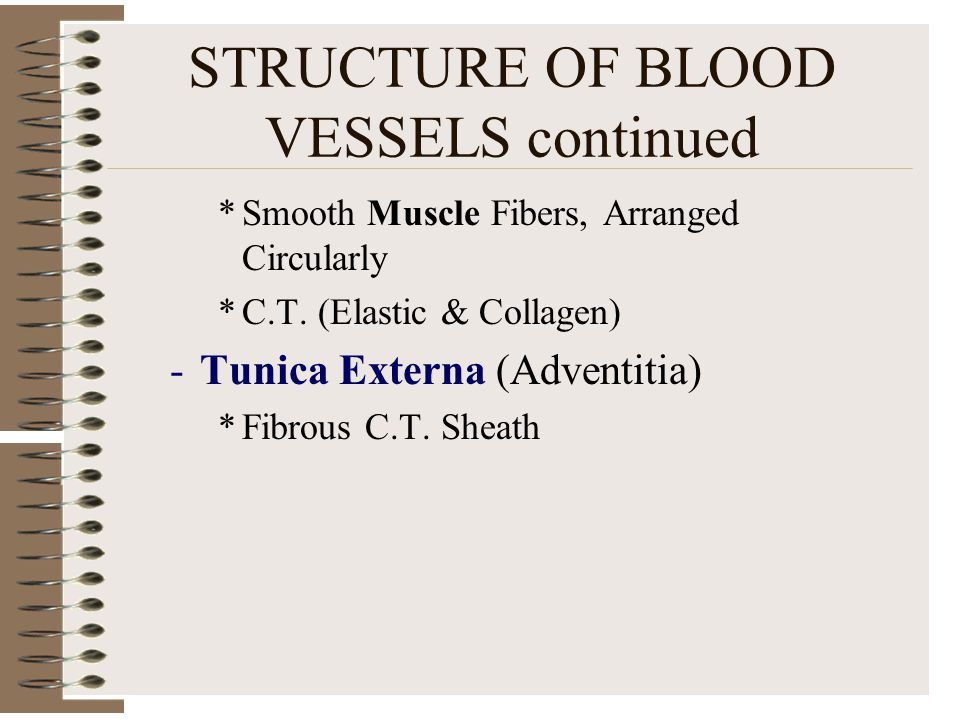 STRUCTURE OF BLOOD VESSELS continued