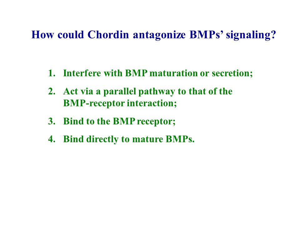 How could Chordin antagonize BMPs' signaling