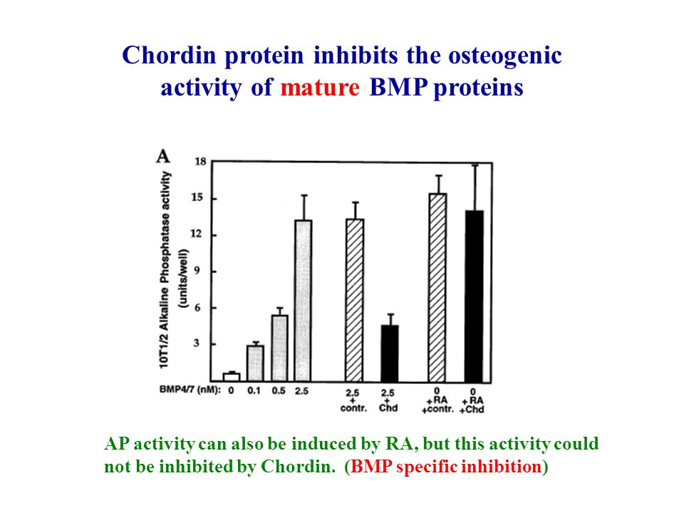 Chordin protein inhibits the osteogenic activity of mature BMP proteins
