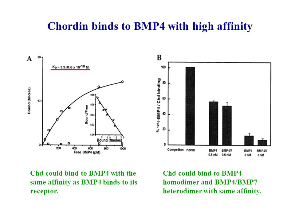 Chordin binds to BMP4 with high affinity
