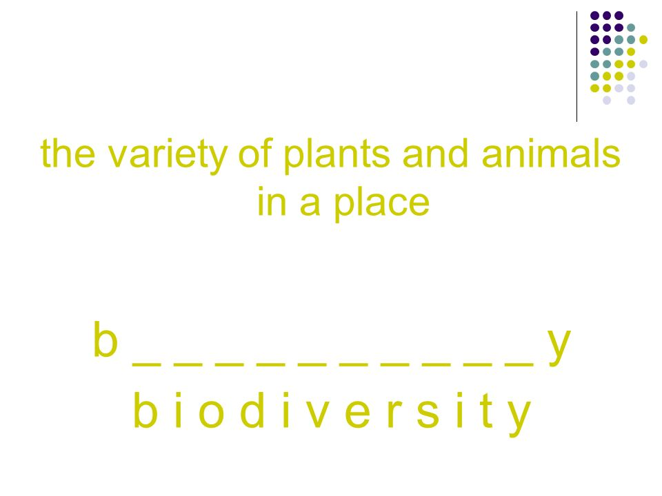 the variety of plants and animals in a place
