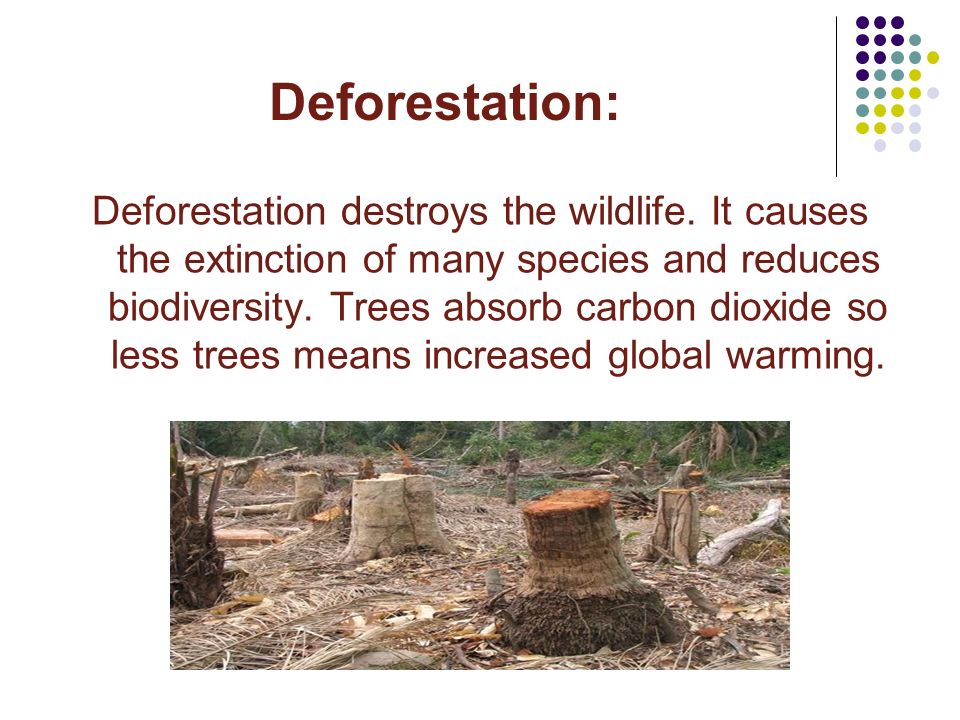 relationship between deforestation and wildlife extinction in