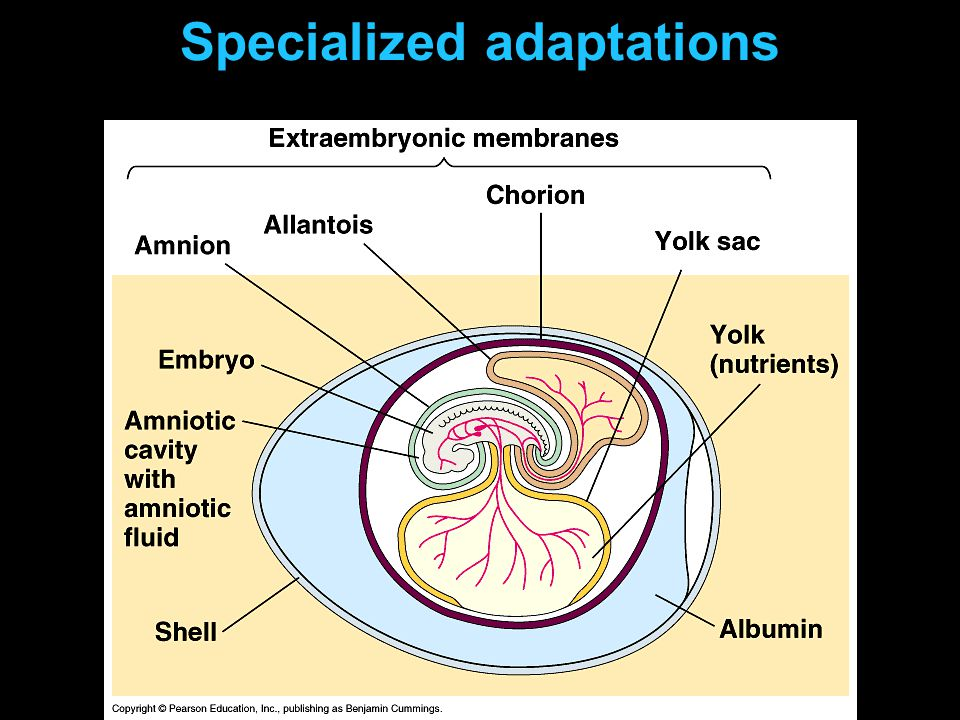 Specialized adaptations