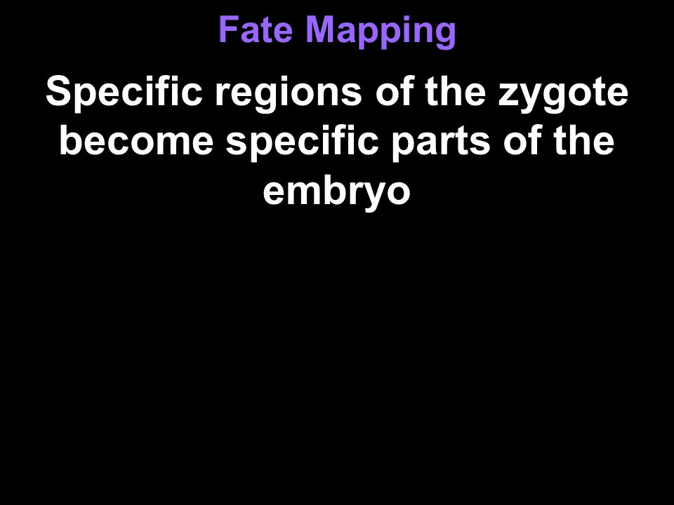 Specific regions of the zygote become specific parts of the embryo