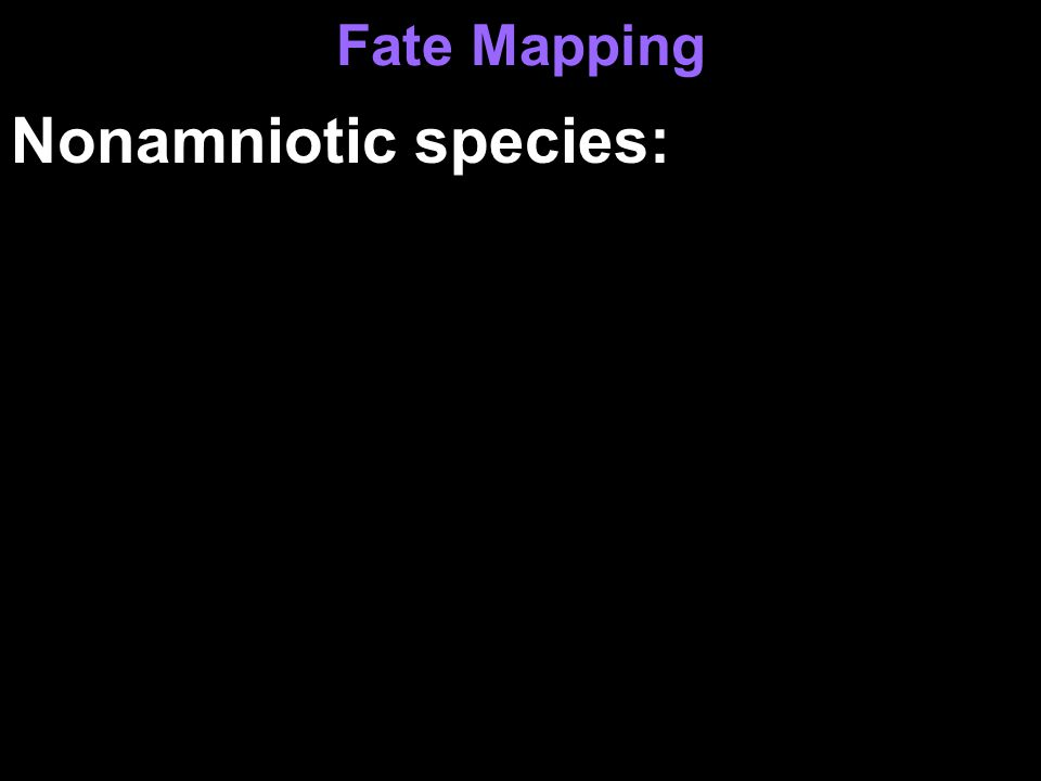 Fate Mapping Nonamniotic species: