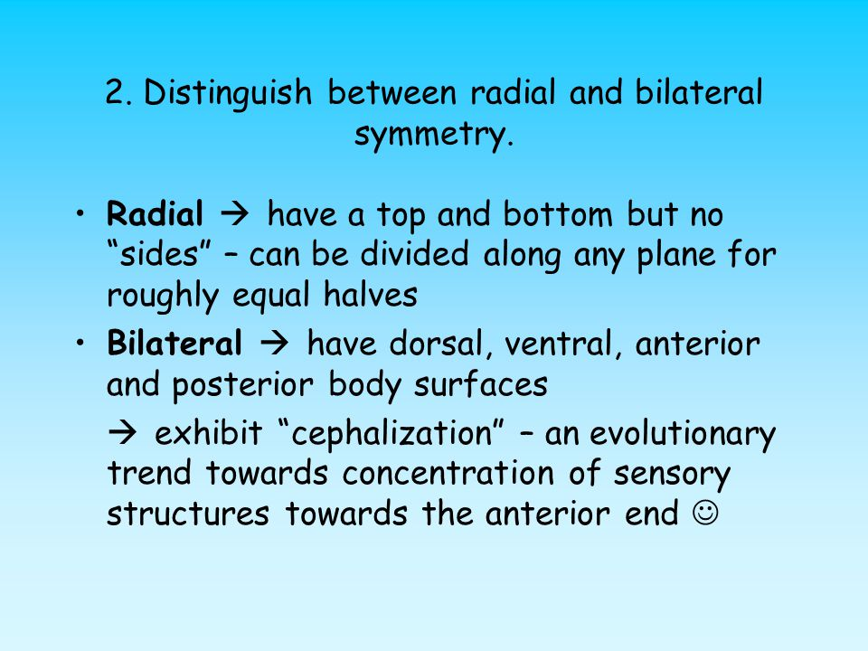 2. Distinguish between radial and bilateral symmetry.