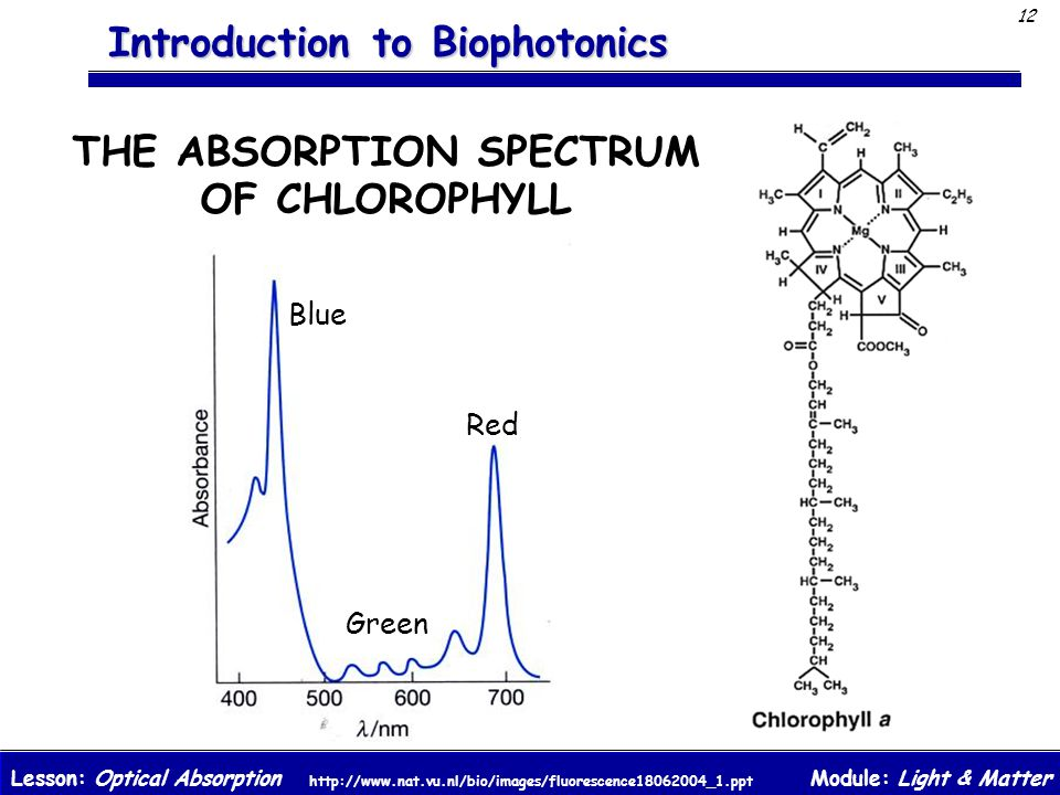 THE ABSORPTION SPECTRUM OF CHLOROPHYLL