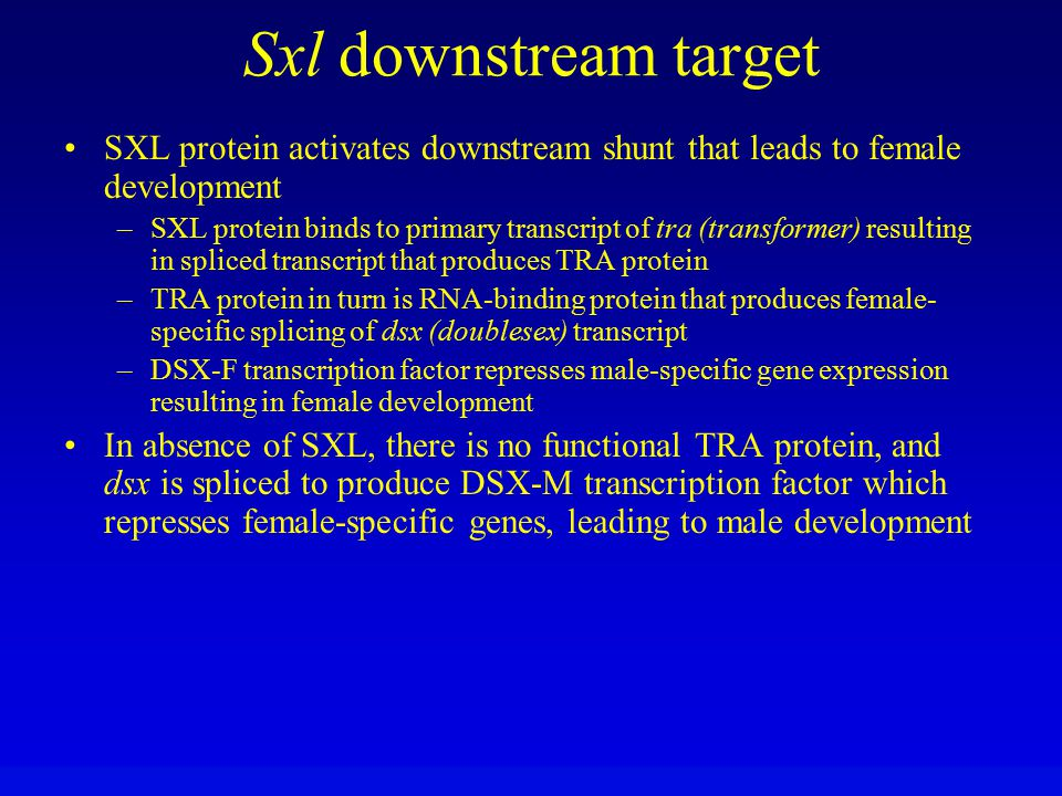 Sxl downstream target SXL protein activates downstream shunt that leads to female development.