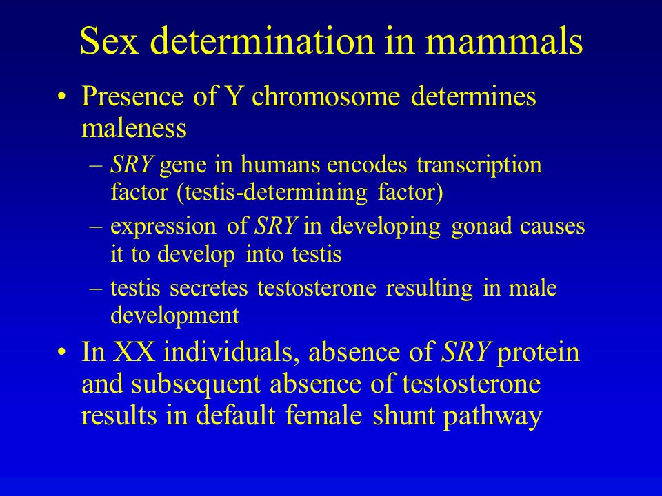 Sex determination in mammals