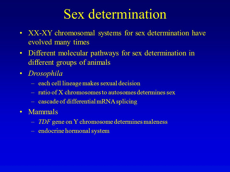 Sex determination XX-XY chromosomal systems for sex determination have evolved many times.