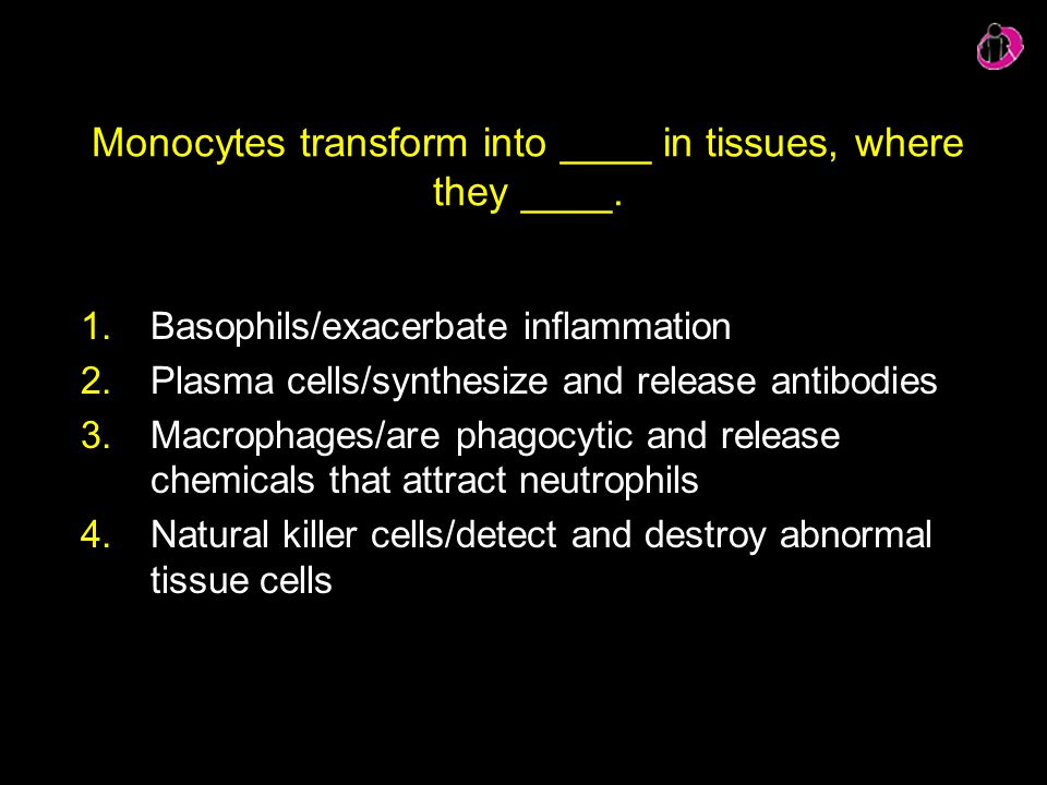 Monocytes transform into ____ in tissues, where they ____.