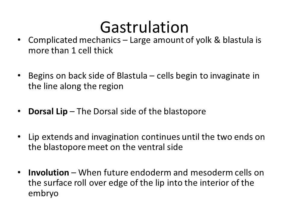 Gastrulation Complicated mechanics – Large amount of yolk & blastula is more than 1 cell thick.