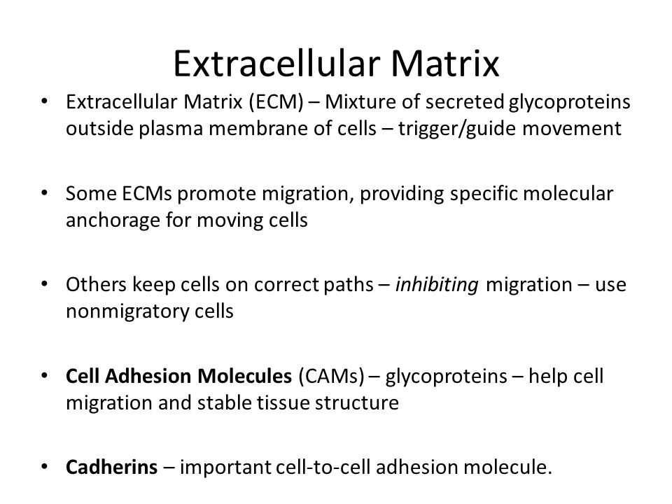 Extracellular Matrix Extracellular Matrix (ECM) – Mixture of secreted glycoproteins outside plasma membrane of cells – trigger/guide movement.