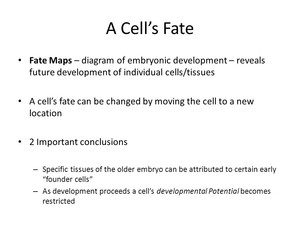 A Cell's Fate Fate Maps – diagram of embryonic development – reveals future development of individual cells/tissues.