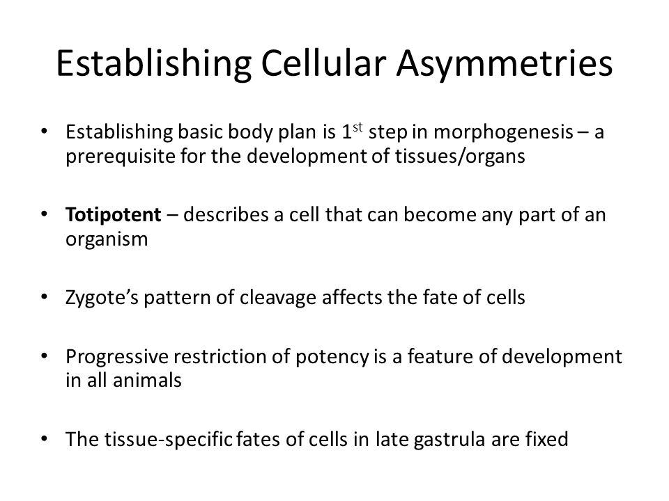 Establishing Cellular Asymmetries