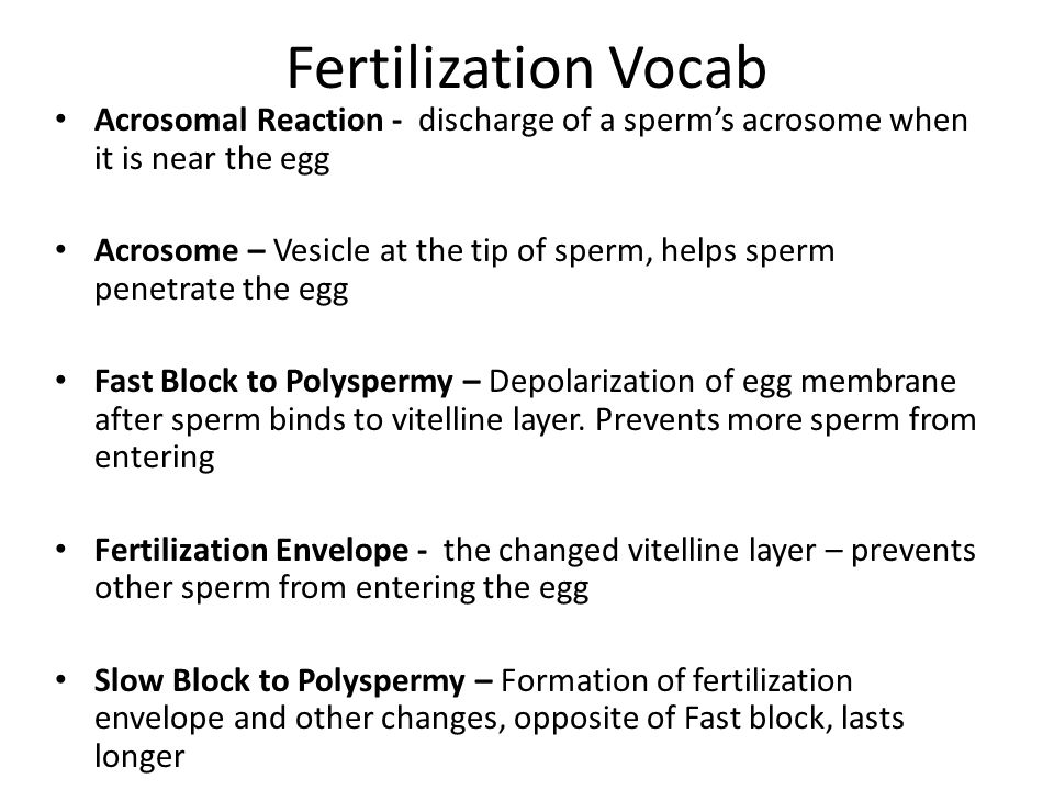 Fertilization Vocab Acrosomal Reaction - discharge of a sperm's acrosome when it is near the egg.
