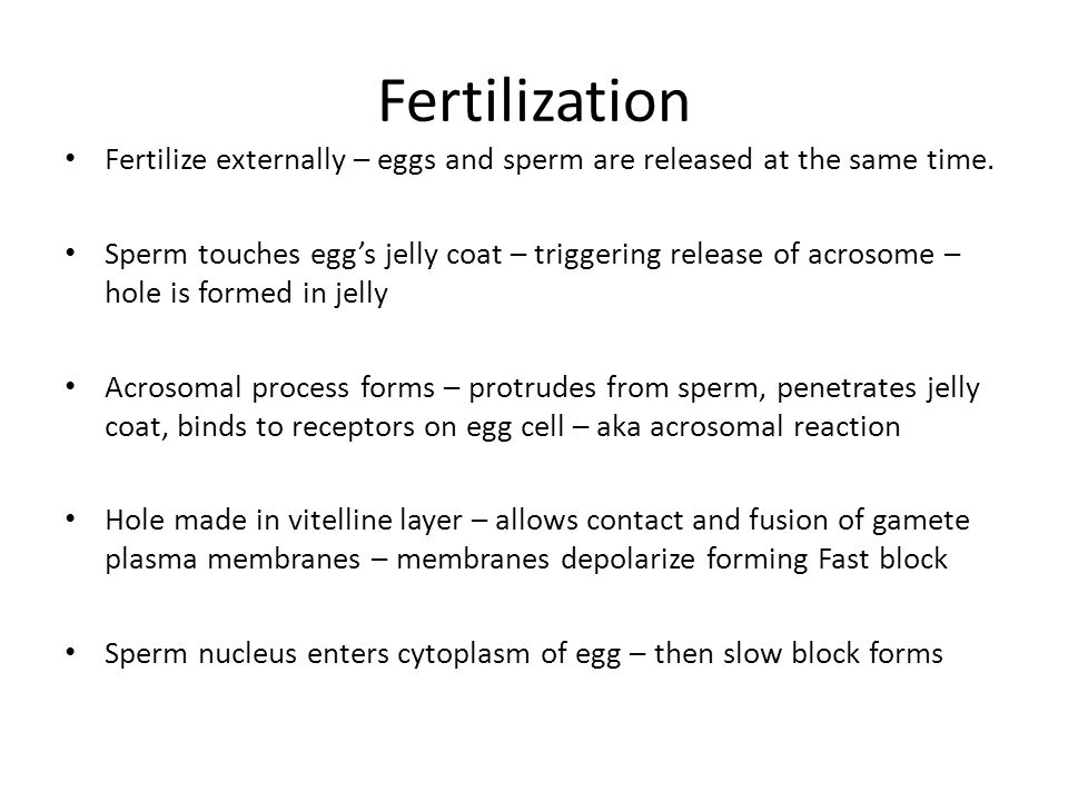 Fertilization Fertilize externally – eggs and sperm are released at the same time.