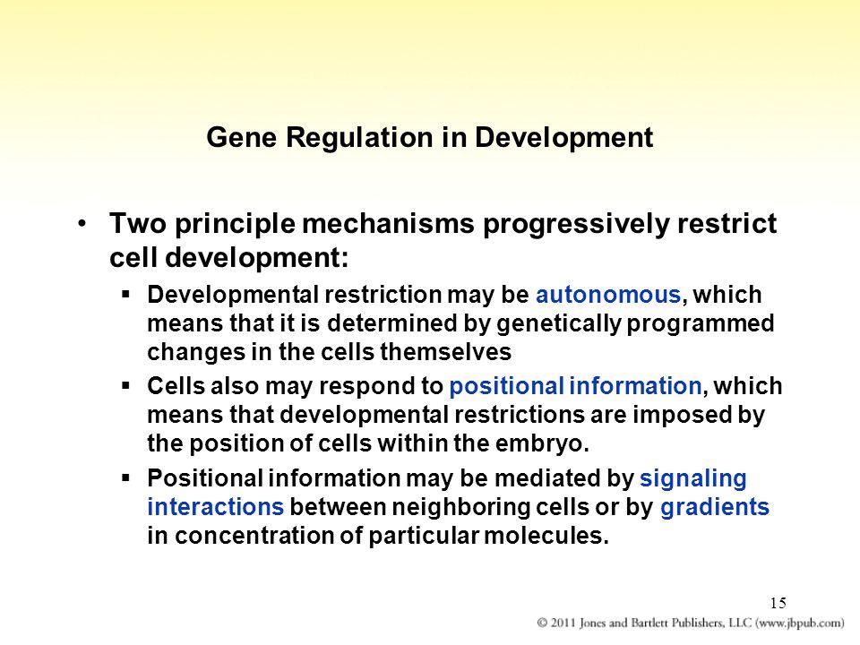 Gene Regulation in Development