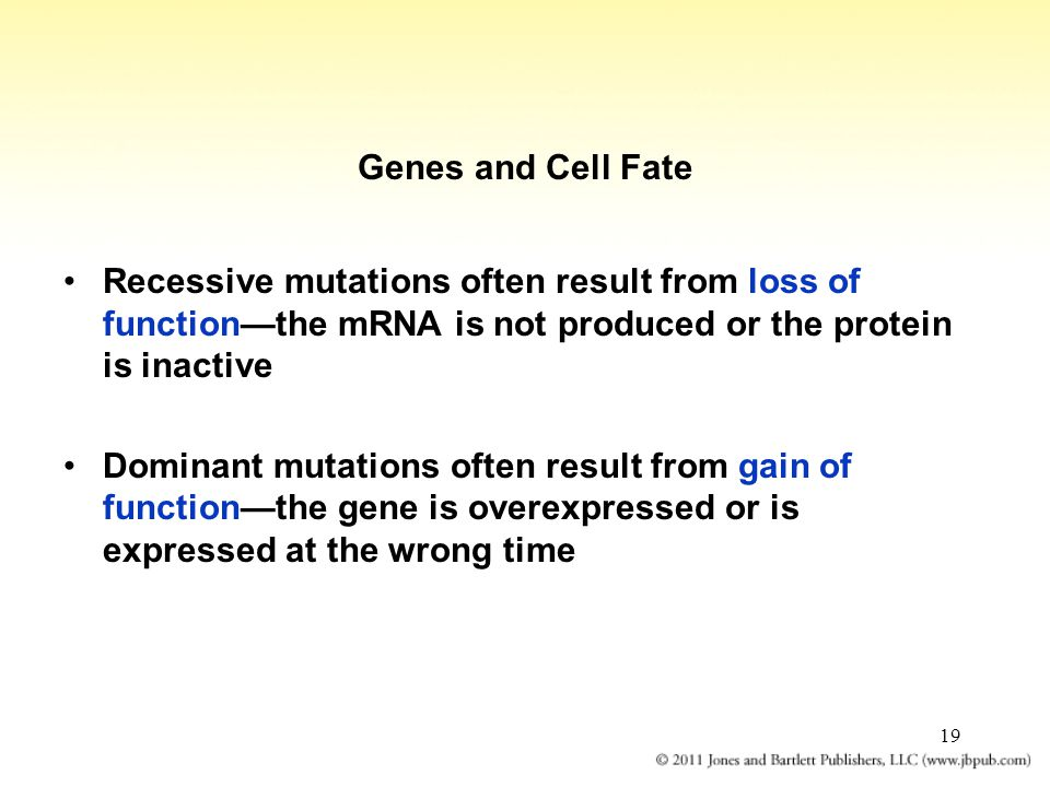Genes and Cell Fate Recessive mutations often result from loss of function—the mRNA is not produced or the protein is inactive.