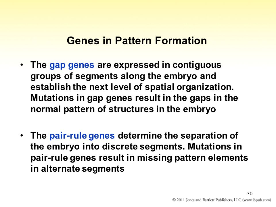 Genes in Pattern Formation