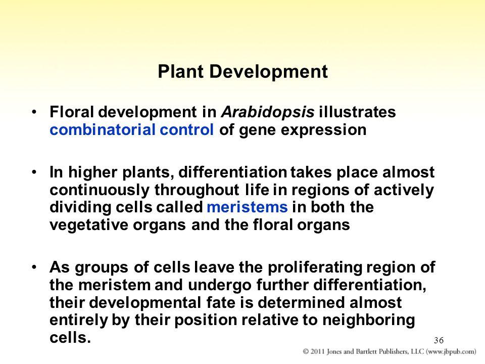 Plant Development Floral development in Arabidopsis illustrates combinatorial control of gene expression.