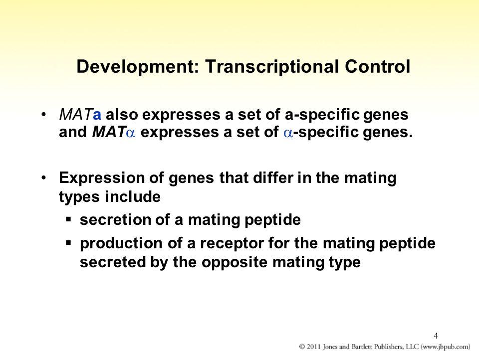 Development: Transcriptional Control