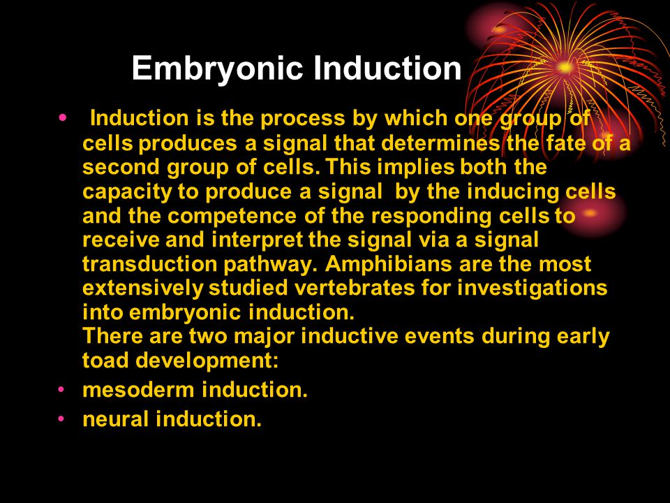 Embryonic Induction