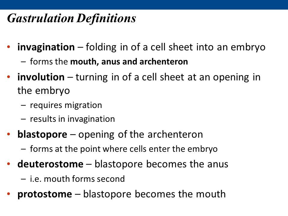 Gastrulation Definitions