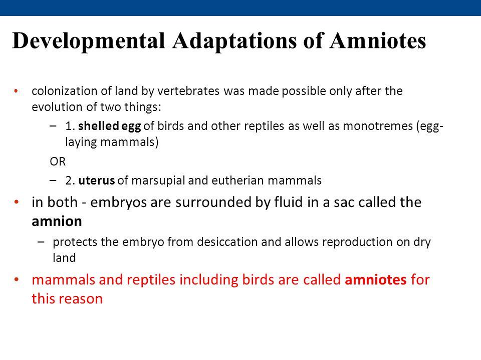Developmental Adaptations of Amniotes