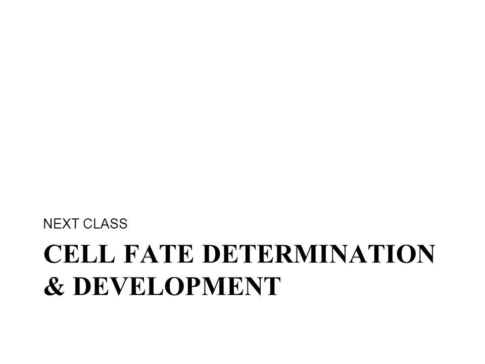 Cell Fate determination & development