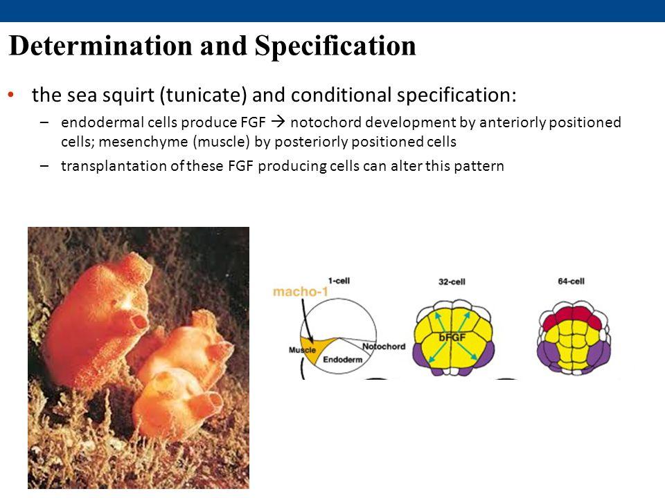Determination and Specification